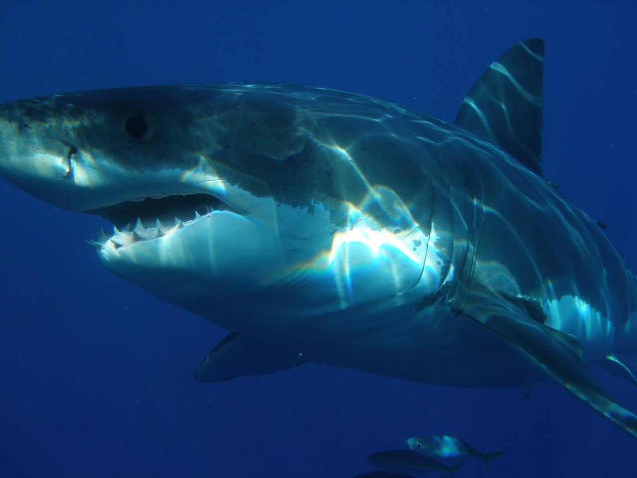 Porodica na odmoru iz horor filmova – okružena najvećim morskim predatorom!