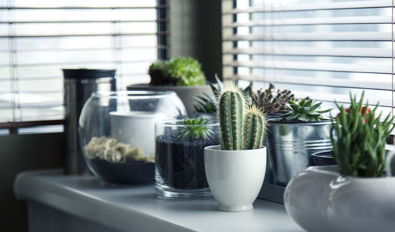 Evo kako sobne biljke utiču na vaše zdravlje
