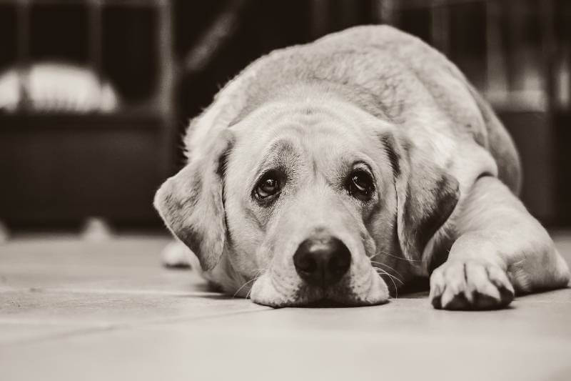 Priča o ljubavi ova dva psa iz Hrvatske će dotaći i najtvrđa srca