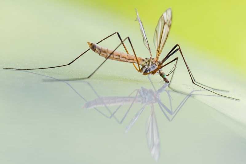Komarci napadaju najviše ljude koji imaju ove 4 osobine: Zaštitite se biljkom koja košta samo 100 dinara!