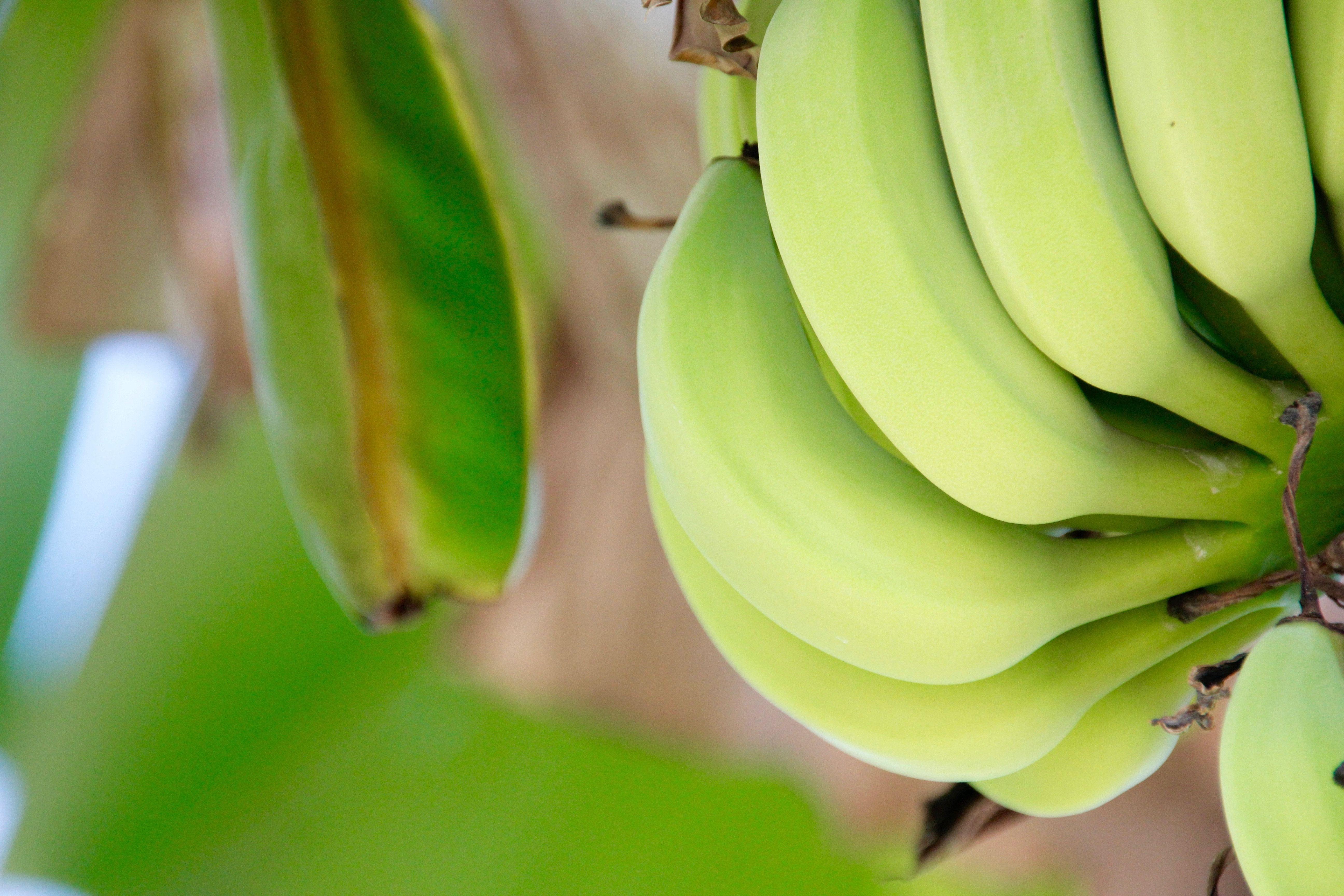 11 razloga zašto treba da jedete banane