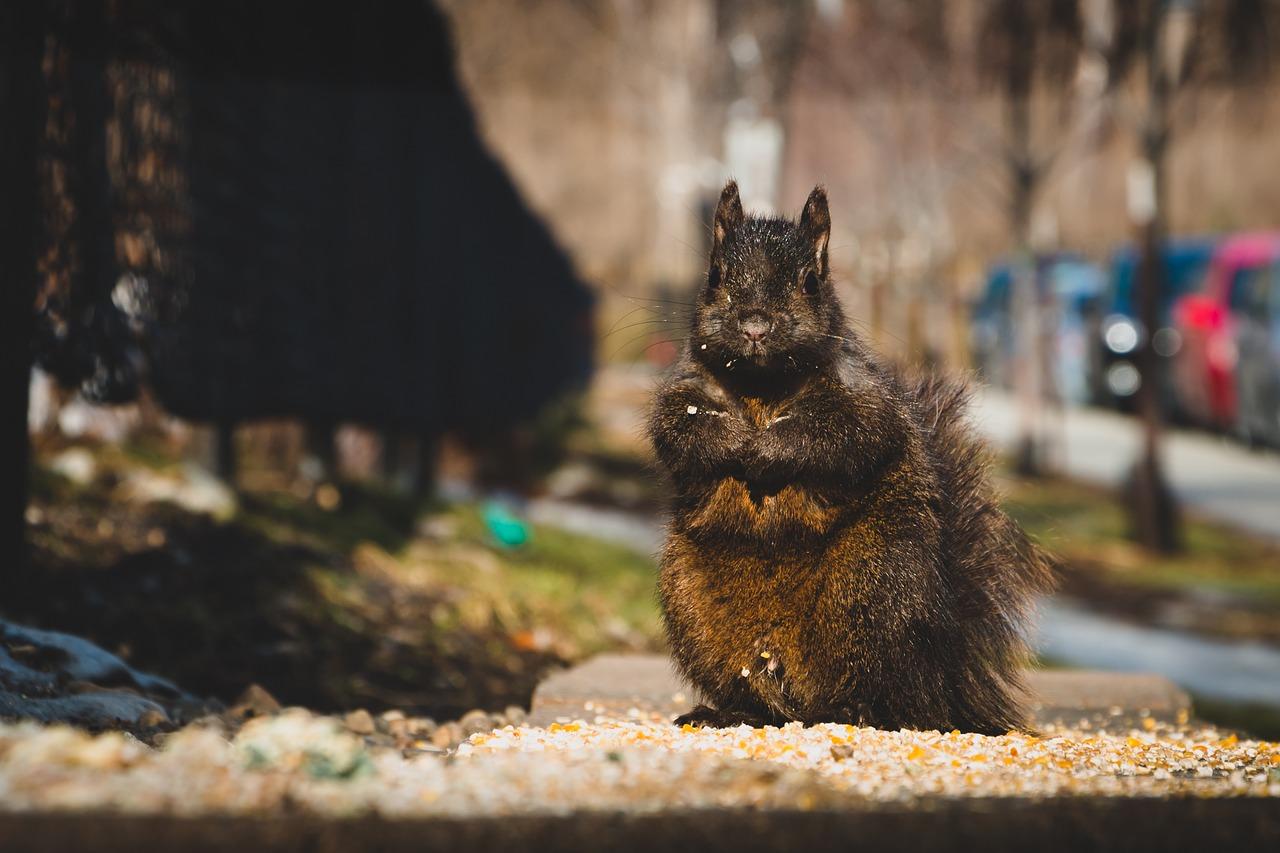 Ko su gradske face životinjskog carstva?