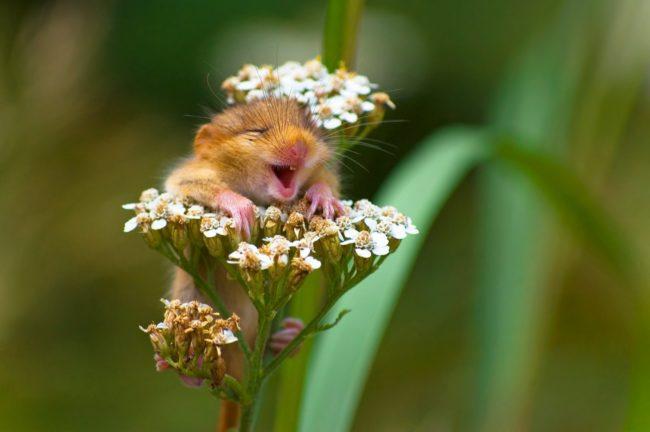 Ovo su najsmešnije fotografije divljih životinja u 2017. godini