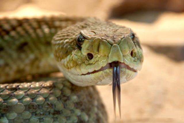 Urođen ili naučen strah: Zašto se bojimo zmija?