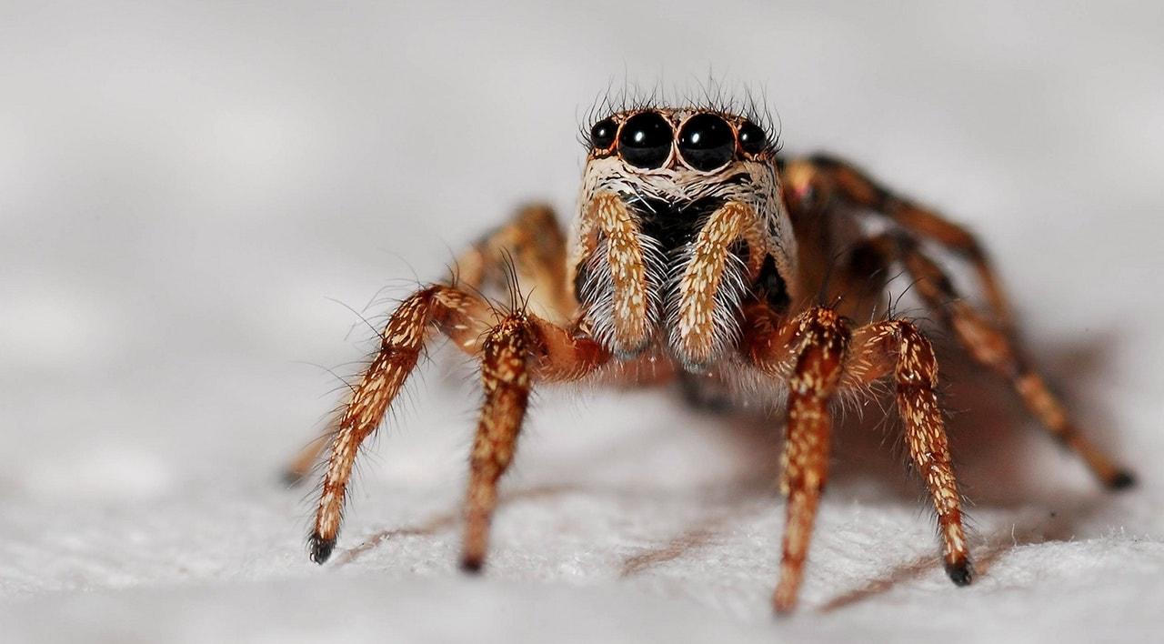 Većina nas se boji paukova, ali znate li zašto?