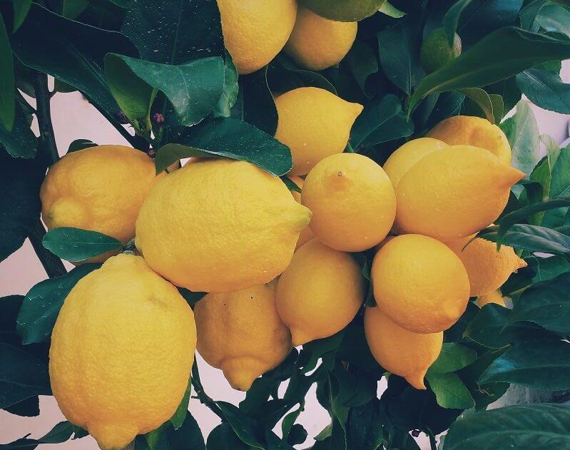 Isecite limun, rasporedite ga po sobi i gledajte šta sve čini za vaše zdravlje!