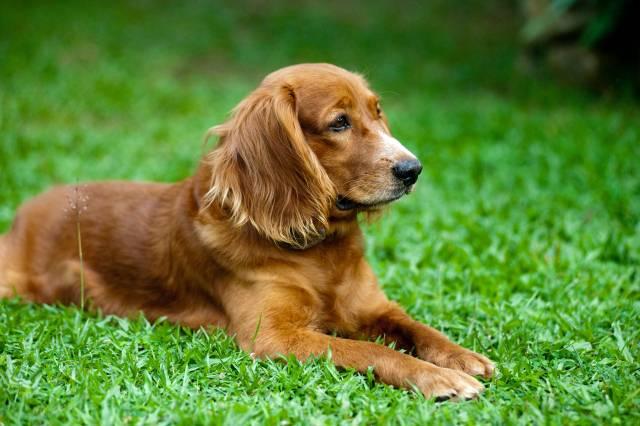 Njegova odanost će vas raznežiti: U ovog psa su se zaljubili ljudi širom sveta!