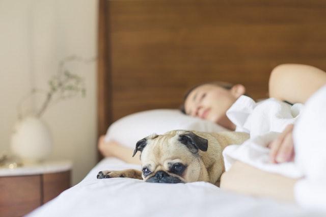 7 razloga zašto je spavanje sa psom dobro za vas