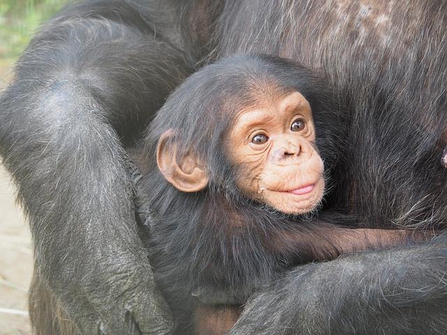 10 najpametnijih životinja na svetu