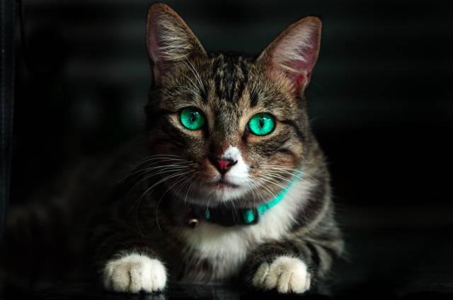 Tema broj 1 na Tviteru: Internet je zaljubljen u nabildovanu mačku a nećete ni vi moći da joj odolite!