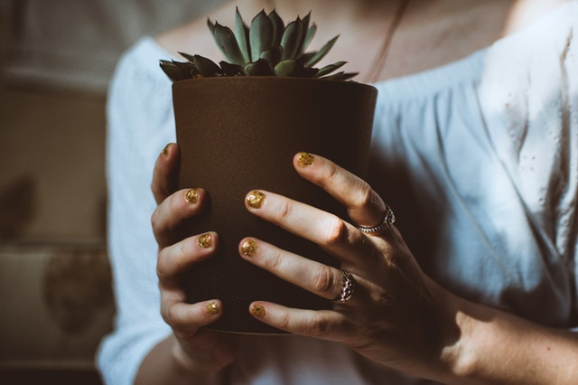 Biljke ne moraju da se zalivaju da bi preživele