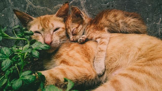 Životinje koje su pokazale da je i kod njih majčinstvo predivna stvar