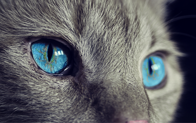 Mačke mogu da vide stvari koje su ljudskom oku nevidljive