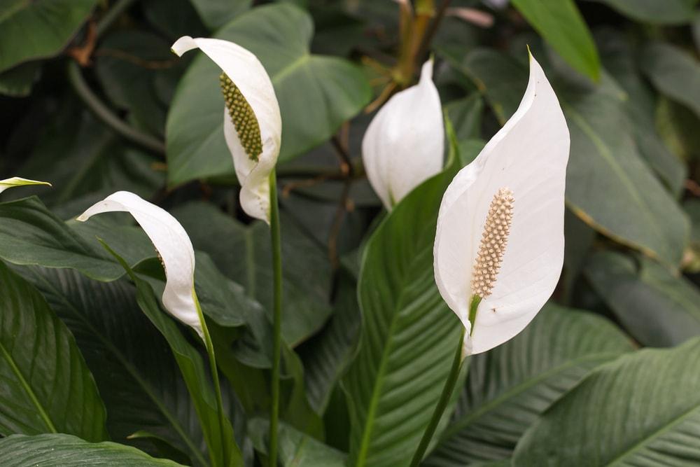 Feng Šui saveti koje vredi primeniti: 6 biljaka koje unose novac u kuću