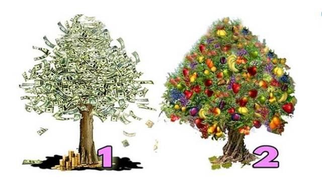 Drvo koje vam se više dopada otkriće vam da li ćete imati novca i kada će on doći u vaš život