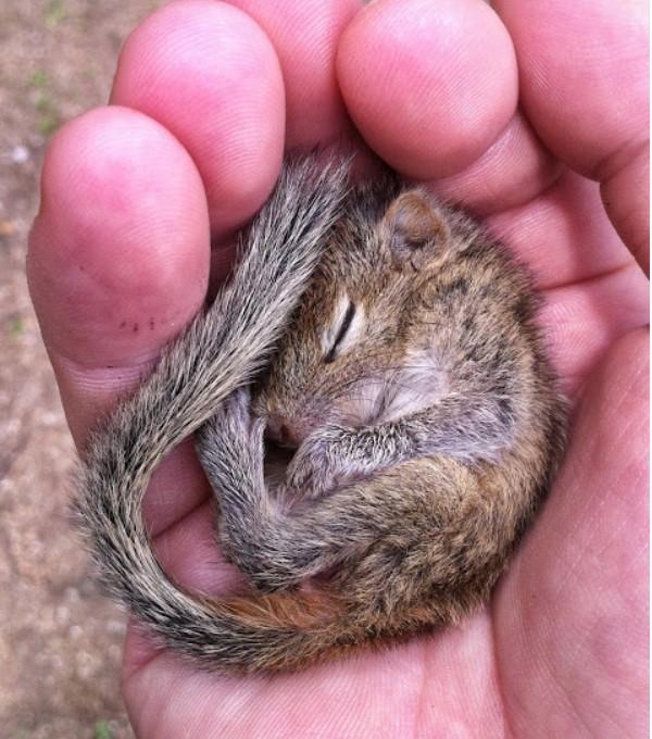 Predivna priča o poznanstvu veverice spavalice i dokumentariste BBC-ja