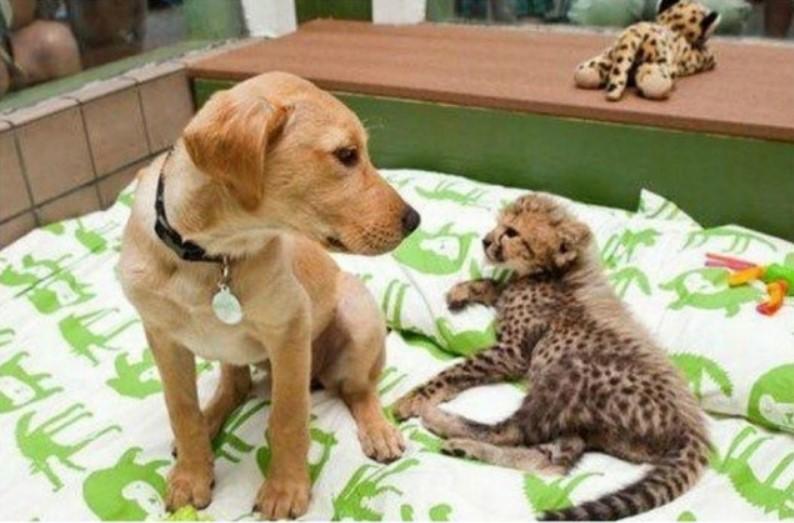 Prijateljstva između životinja koja će istopiti svačije srce