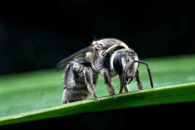 Šta treba da radite ako vas u prirodi ubode pčela, osa ili stršljen?