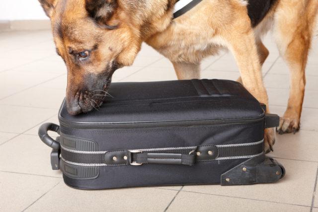 Pas koji je zaradio 1,7 miliona dolara