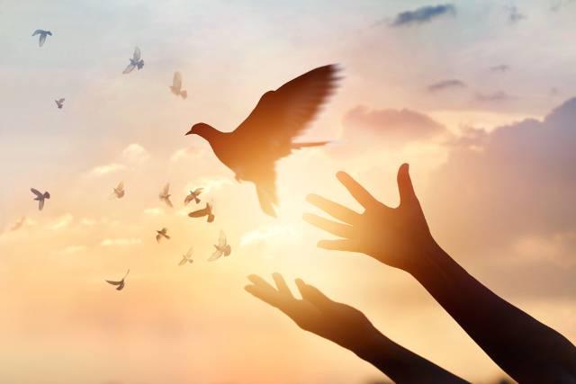 Kako golub pismonoša zna put do kuće?