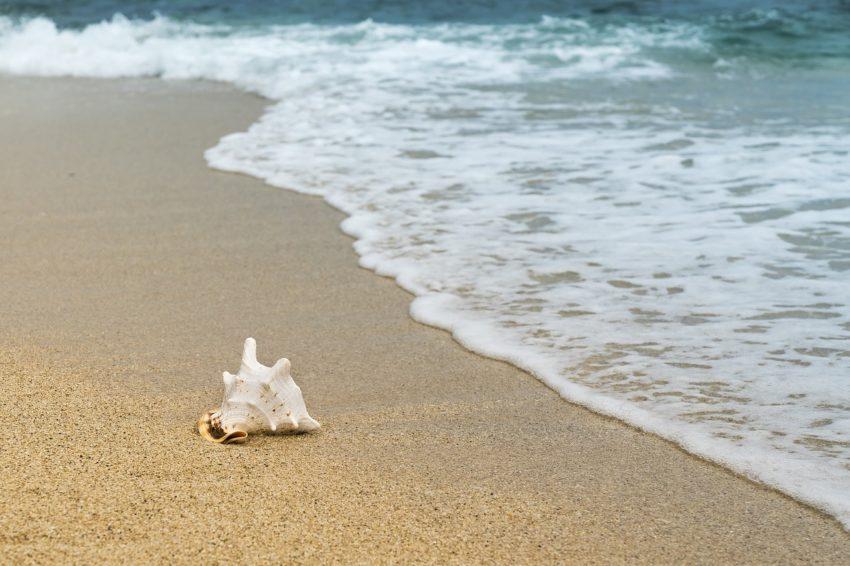 Zašto je more slano? Plaza-skoljka-more-pixabay-e1537187931411