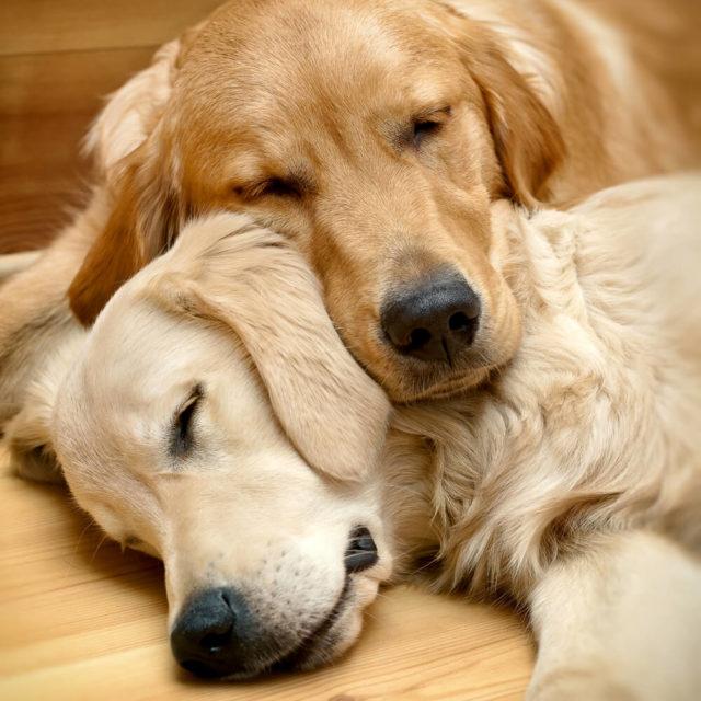Zašto se psi sklupčaju kad spavaju