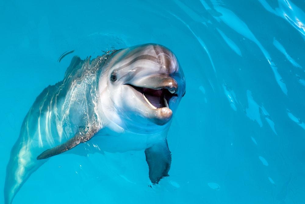 Čarobni susret delfina i ljudi koji će vam ulepšati dan