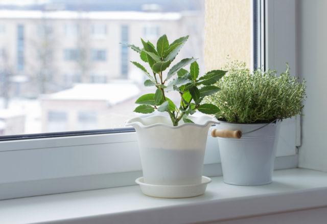 Koje cveće može da ošteti vaše zdravlje tokom zimskih meseci