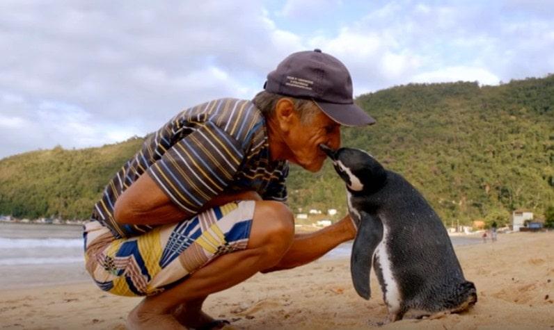 Ovaj pingvin svake godine prepliva 8.000 kilometara da bi se sreo sa svojim spasiocem