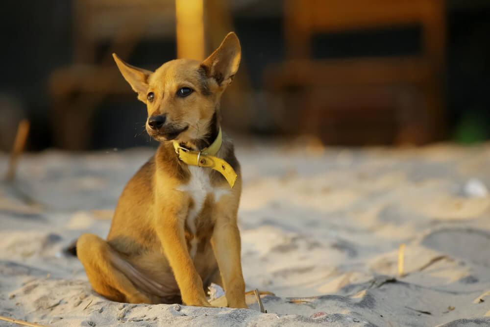 Novobeograđani prave kućice za napuštene pse