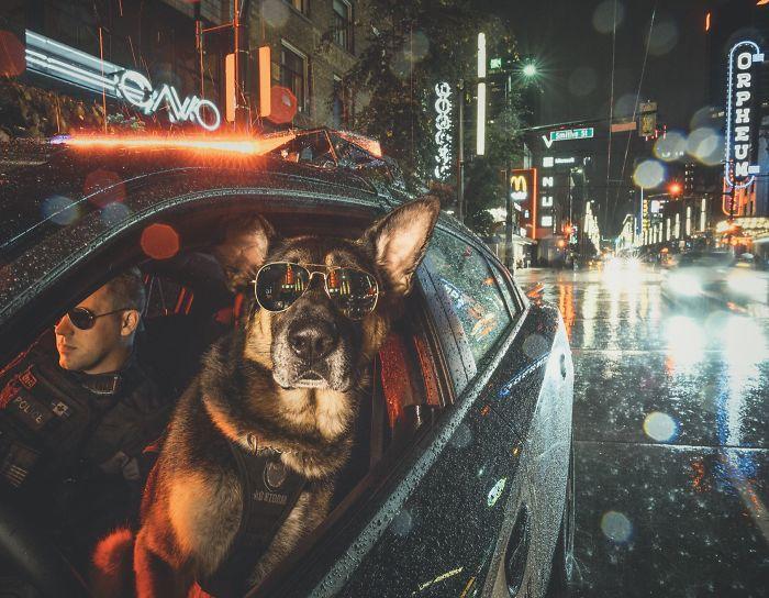 Policijski psi u Vankuveru imaju najbolji kalendar za 2019. godinu