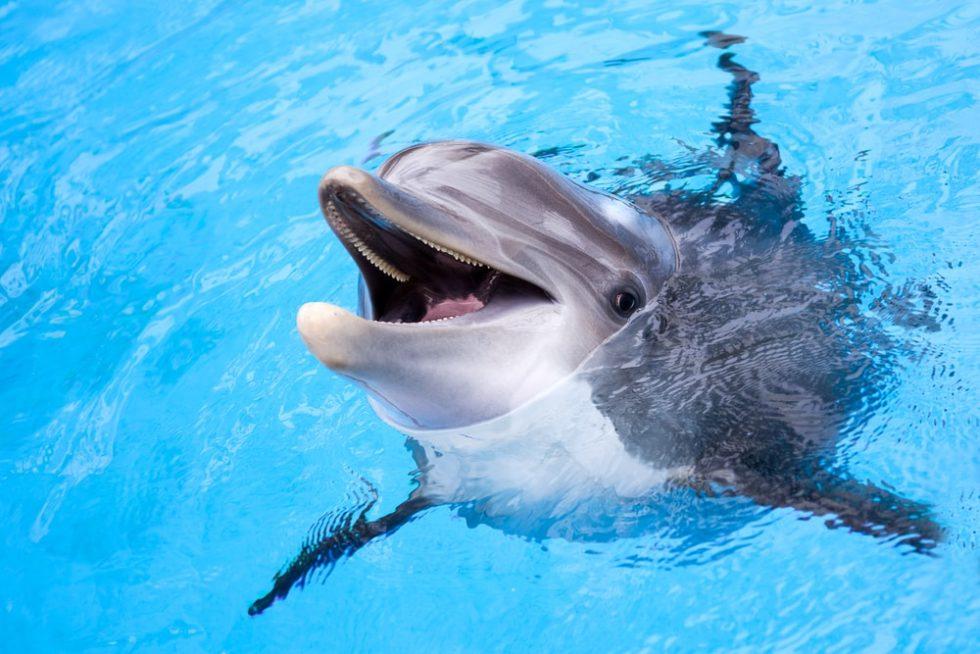 Delfini u Australiji se uželeli ljudi – donosili su im poklone iz mora!