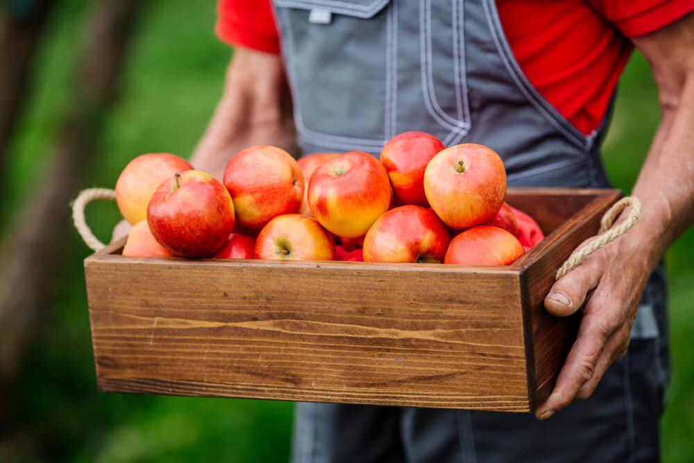 Kako da očistite jabuke od pesticida i drugih hemikalija