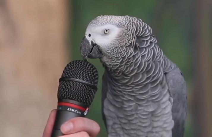 Pogledajte intervju sa Ajnštajnom – najpametnijim papagajem na svetu