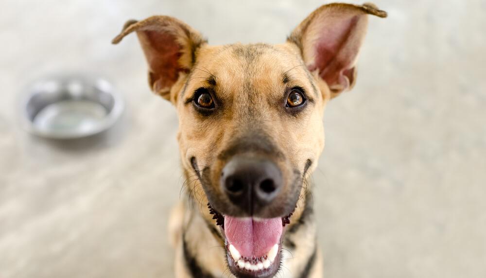15 rasa pasa pogodnih za život u stanu