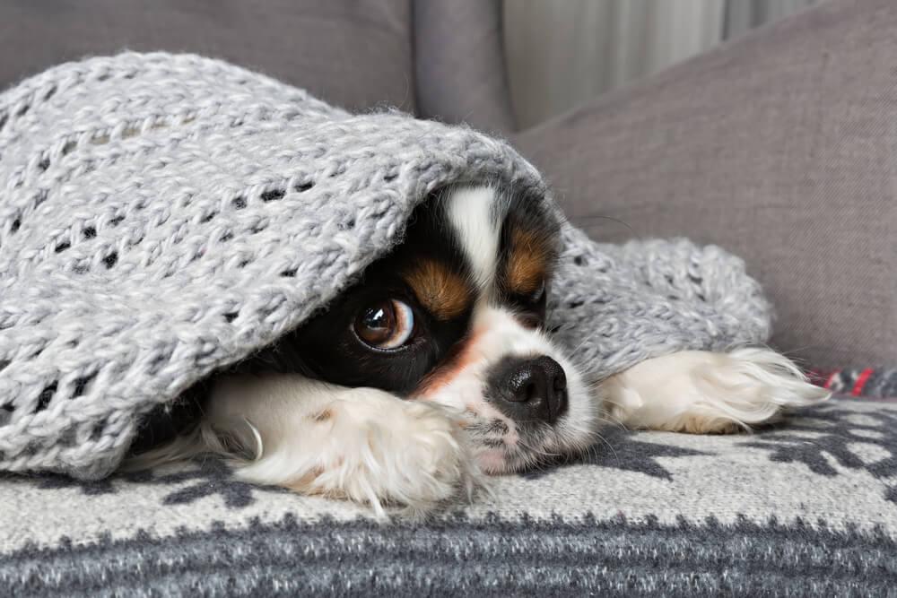 Zašto je spavanje sa psom preporučljivo