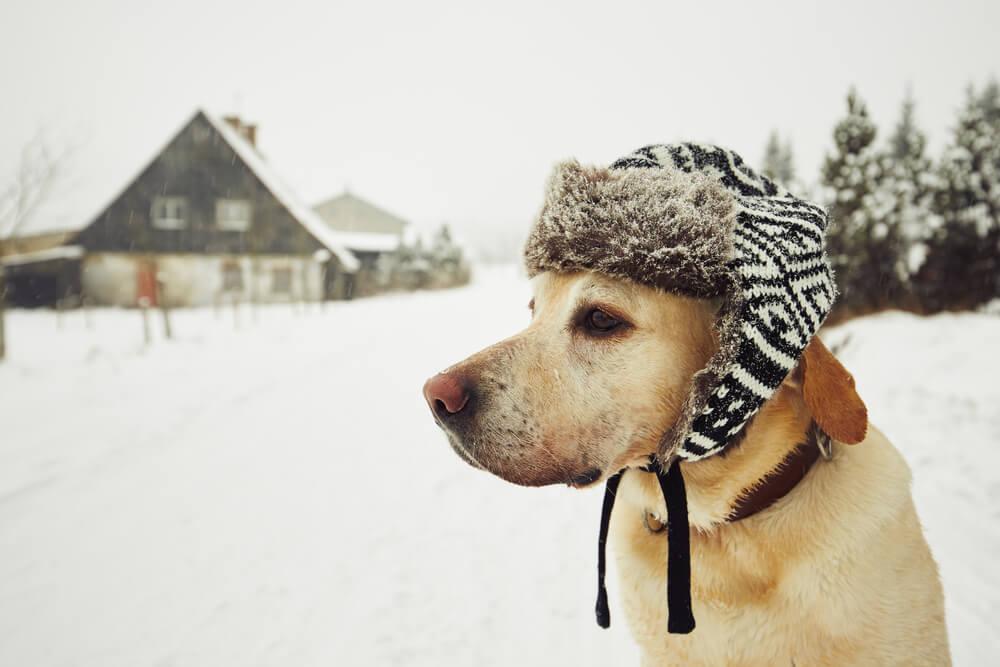 Zašto je životinjama tokom zime naša pomoć potrebnija nego inače