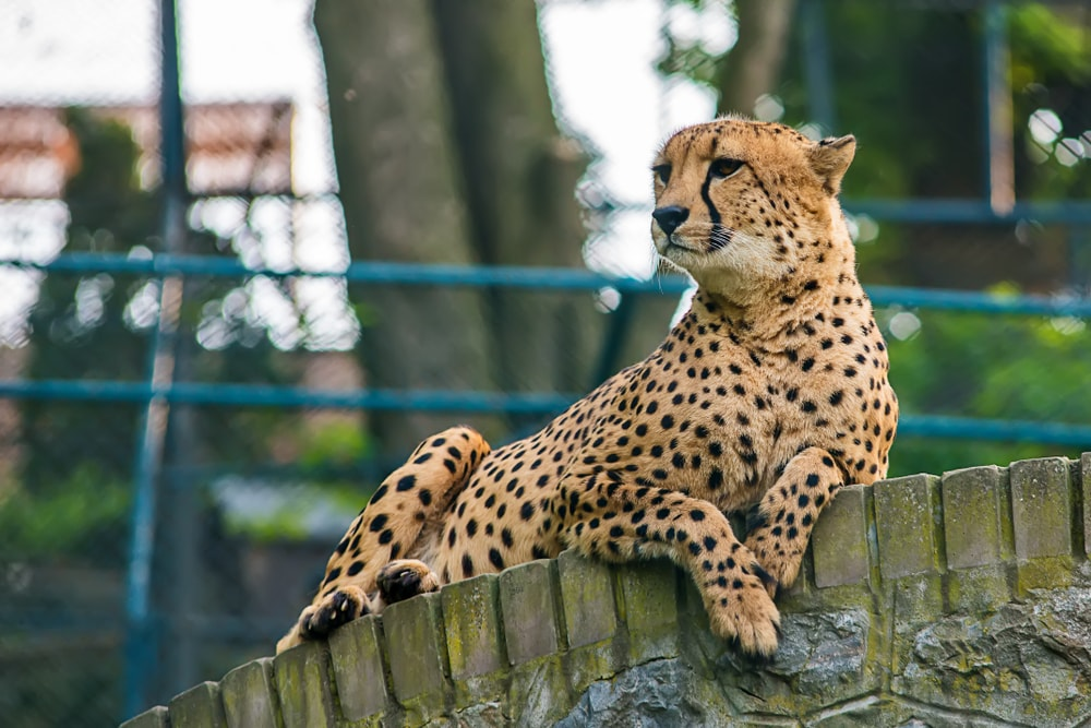 Fotografija iz beogradskog zoo vrta podelila javnost