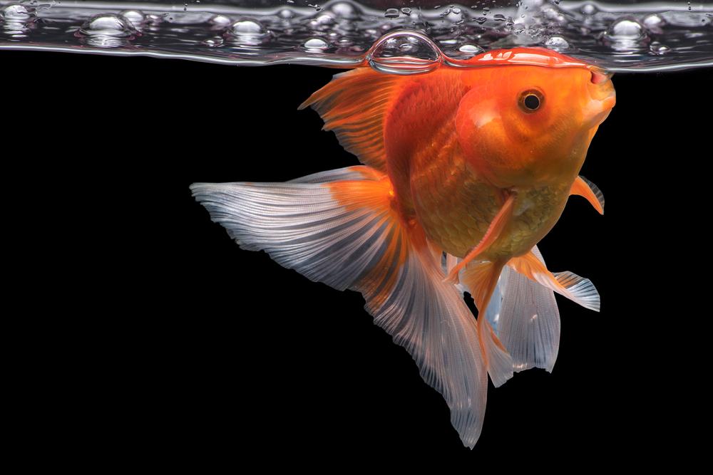Istraživači otkrili da ribe mogu da menjaju pol