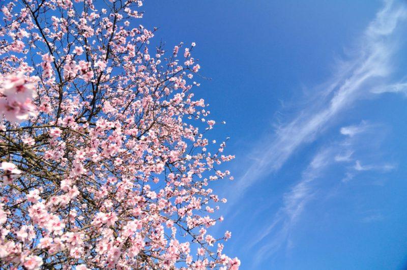 Danas počinje proleće!