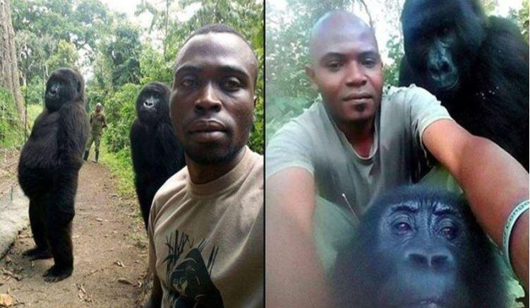 Čuvar iz Konga ima najbolji selfi!