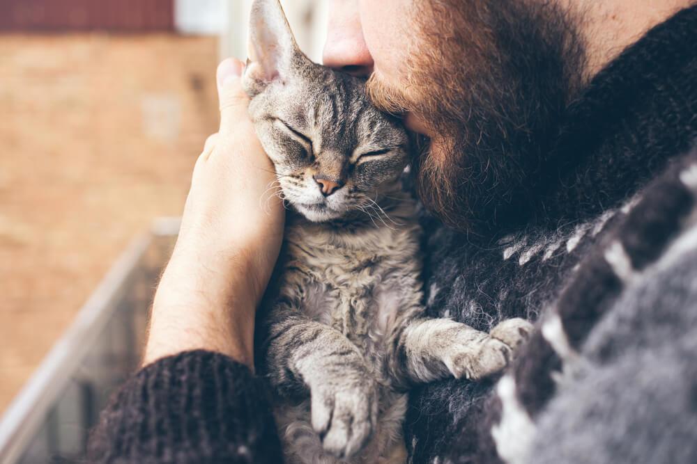 Evo zašto mačke vole da spavaju na glavi svojih vlasnika