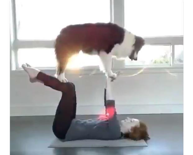 Upoznajte psa koji radi jogu bolje od svoje vlasnice