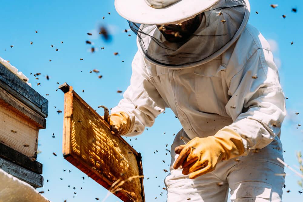 Postavljanje pčelinjaka povodom dana planete Zemlje