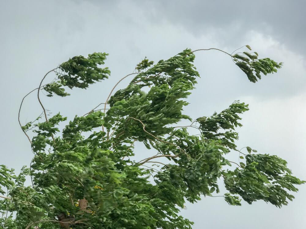 Stiže olujna košava orkanske jačine
