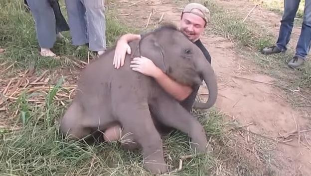 Ovaj slonić voli da se igra sa ljudima!