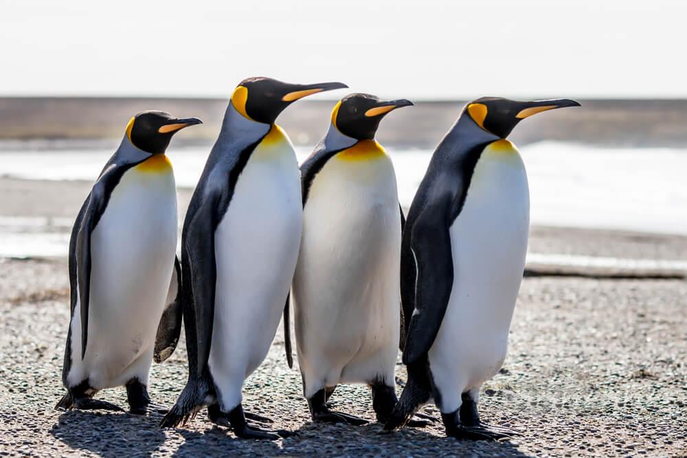 Pingvini se vraćaju u Beo Zoo vrt!