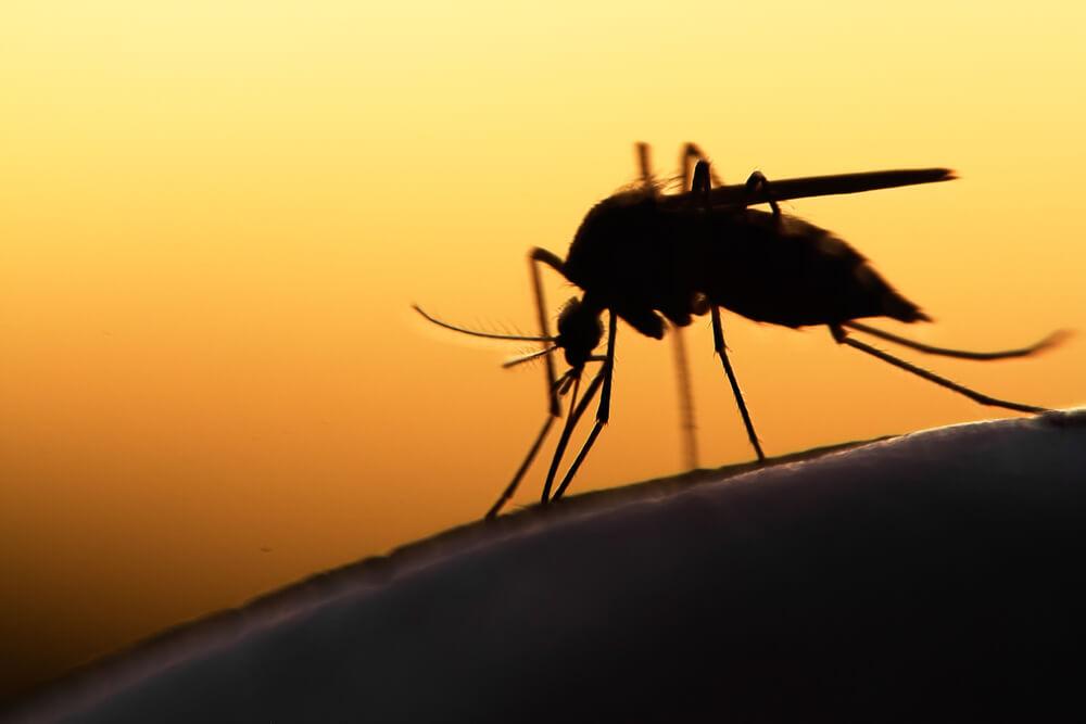 Zašto ovog leta ima više komaraca nego u poslednjih 10 godina