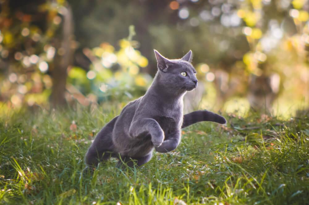 Australijska vlada planira da smanji populaciju mačaka
