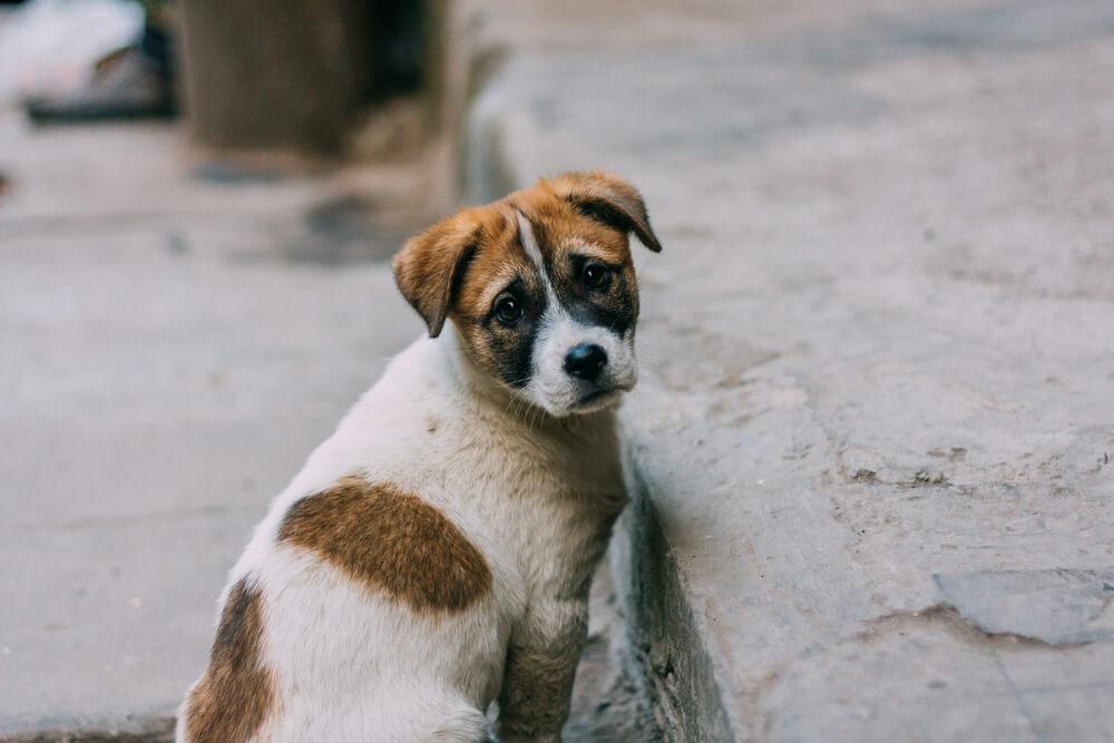 Evo kako je ova evropska zemlja rešila problem pasa lutalica